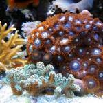 Нано-риф
